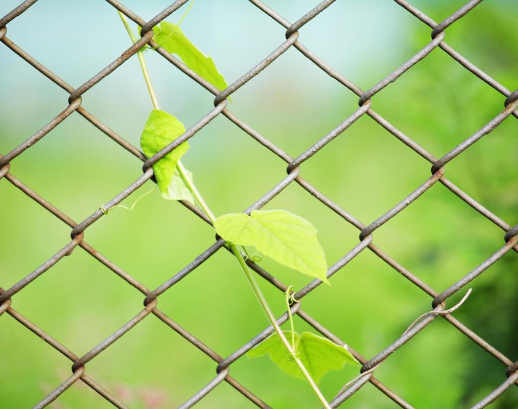 chain link fence greenville